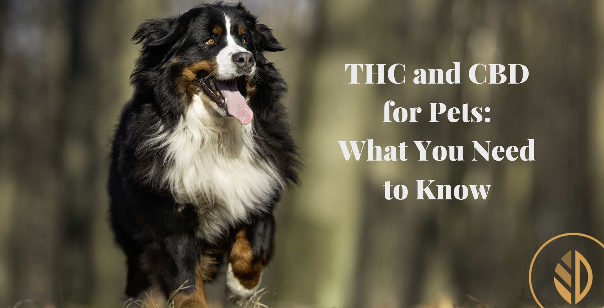 Everything You Need to Know About Cannabis Products for Pets